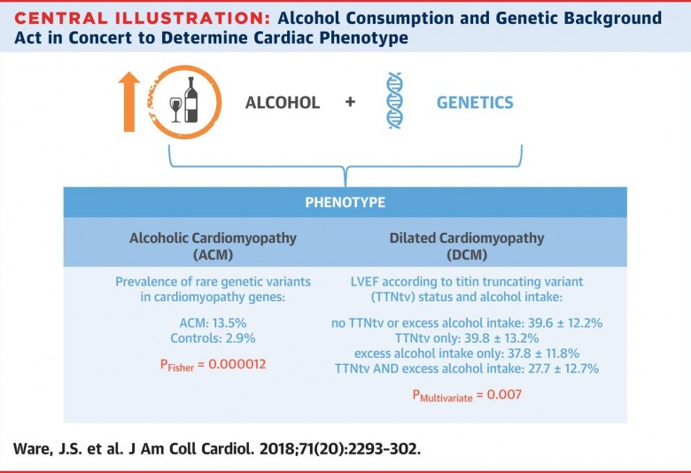 Researchers uncover genetic component of alcoholic cardiomyopathy
