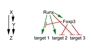Runx: T reg cell keeper and creator